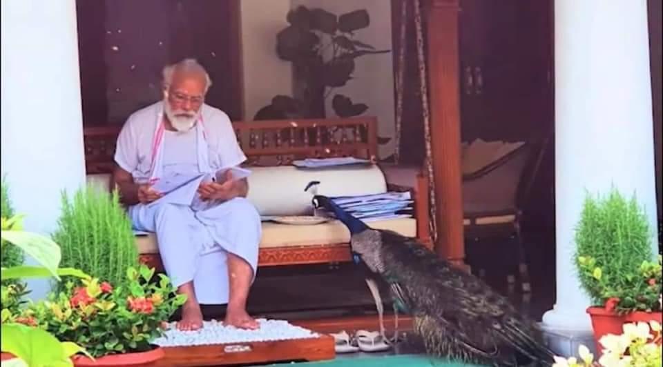 Photo of પ્રધાનમંત્રી નરેન્દ્ર મોદીનો પ્રકૃતિ પ્રેમ મોરને દાણા ખવડાવતા અને લોનમાં લટાર મારતો એક વીડિયો શેર કર્યો