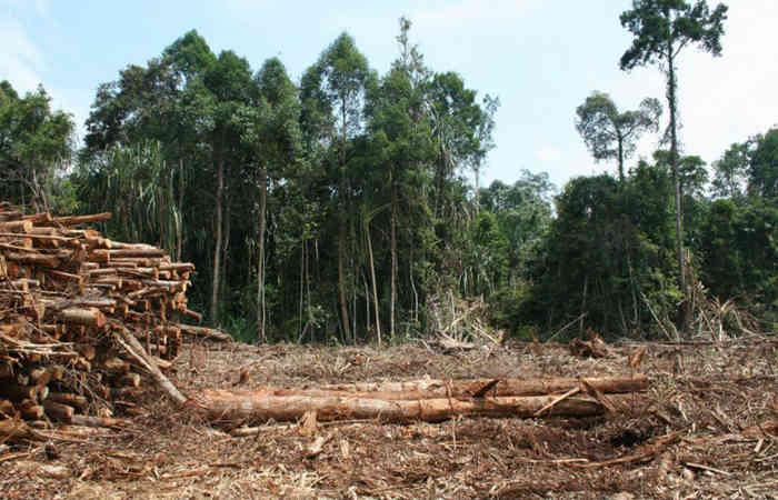 Photo of કપાતા ૭૮૨ વૃક્ષો સામે ગાંધીનગર વનવિભાગ રૂા. ૧૬ લાખ વસુલશે